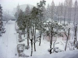 名古屋雪景色